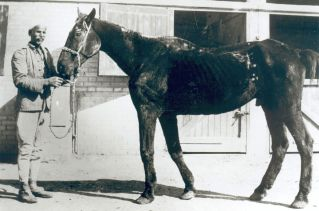 Old Bill, one of the first former British war horses rescued by Dorothy Brooke in Cairo www.BrookeUSA.org.jpg