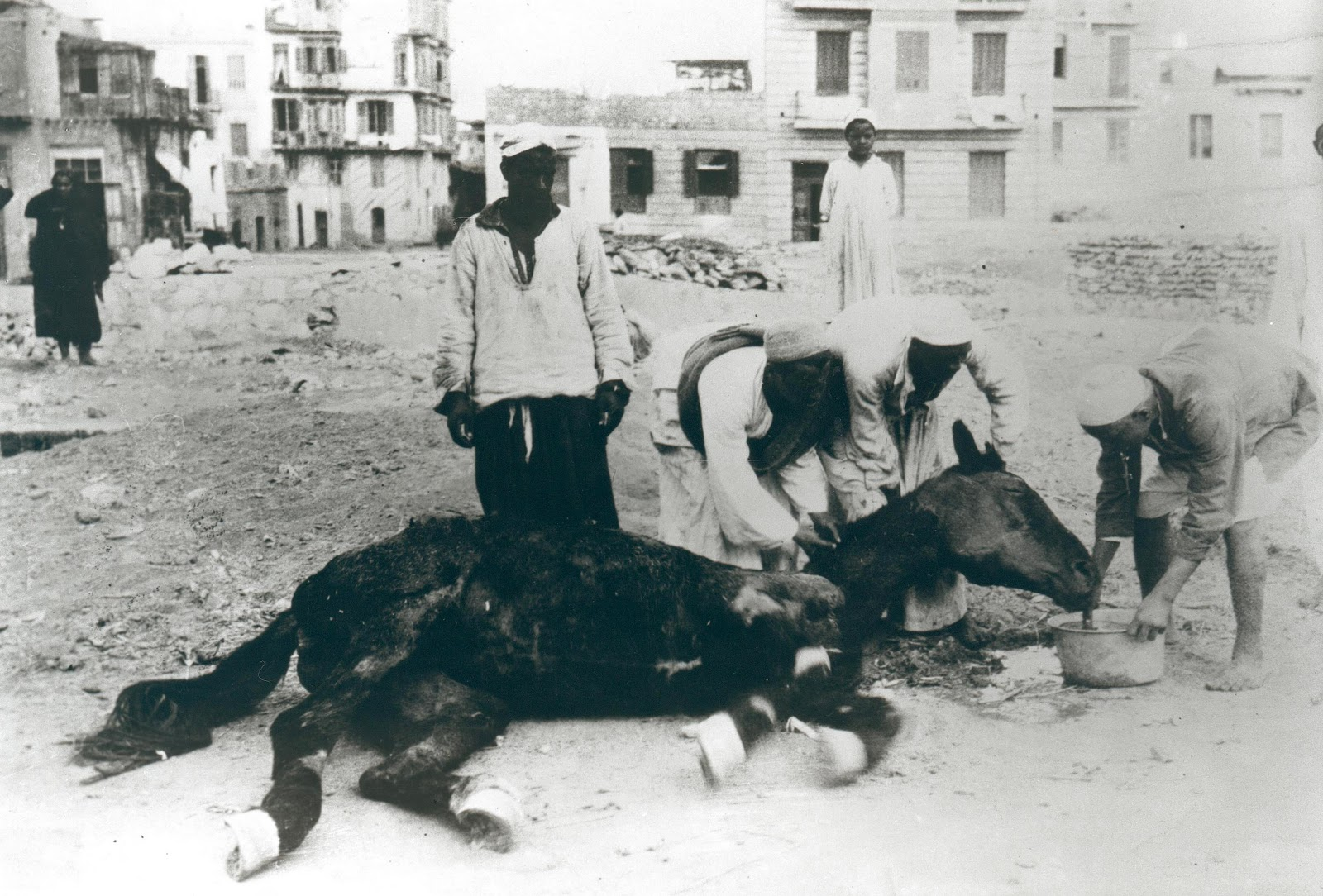 Dorothy Brooke emaciated horse in Cairo.jpg