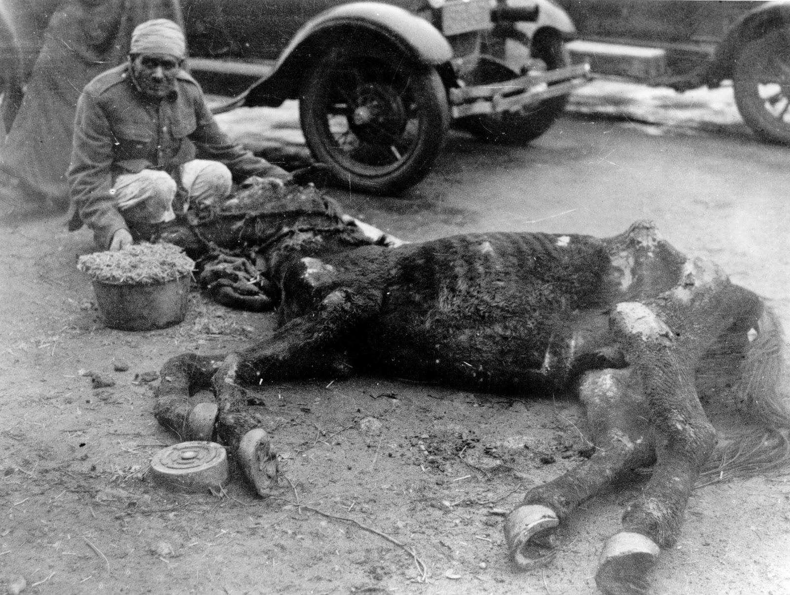 Dorothy Brooke emaciated horse in Cairo 2.jpg