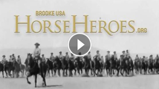 Watch the short Brooke USA  Horse Heroes  video