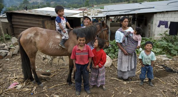 An average of at least six family members rely on each working equine throughout the world cropped small.jpg