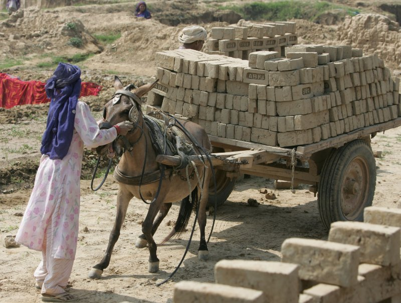 Horses, donkeys, and mules carry out backbreaking labor alongside women. If it weren't for their animals, the burden would fall on the women themselves.
