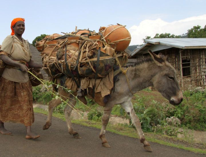 Working equines allow many poor women in the developing world to earn their own money, develop some independence, pay school fees so their children can receive an education, and much, much more.... but only as long as their animals stay healthy and strong.