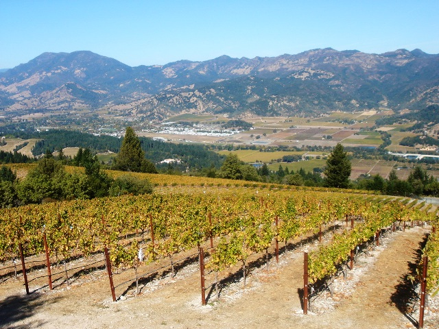 View From Our Diamond Mountain Vineyard.jpg