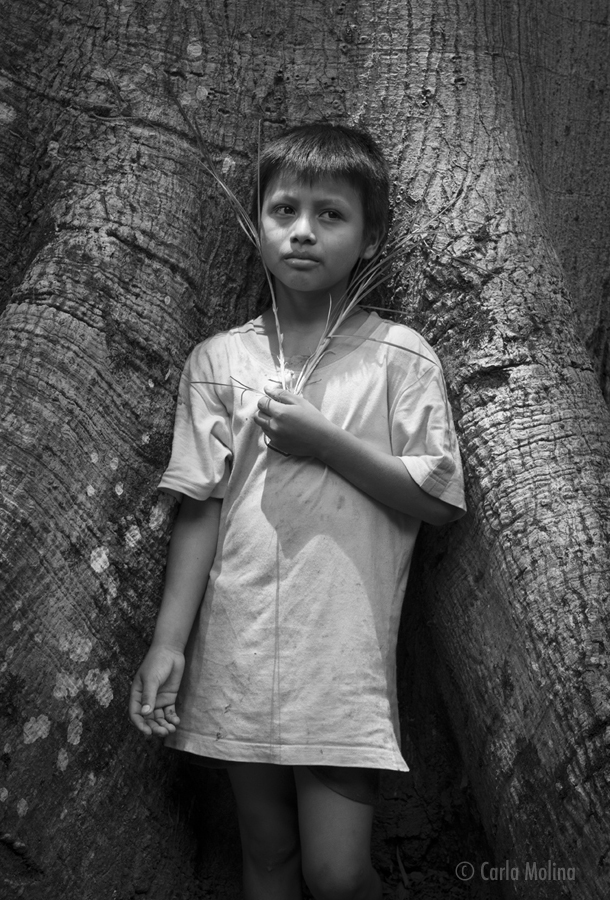 A BOY NAMED EVER  (rio Dulce, Guatemala)  11 X 17 PRINT $55  20 X 30 PRINT $105  a timeless portrait of a young boy named ever.  Captured in a beautiful wash of light, snug in the crevasse of an ancient mangrove tree, holding a blade of grass.  he had selected the grass as his favorite object which he wrote about and later took many pictures of with his camera. © Carla molina
