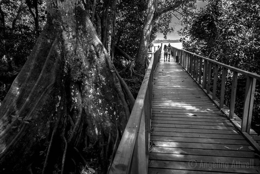 Bridge through the mangroves  (rio Dulce, Guatemala)  11 X 17 PRINT $55  20 X 30 PRINT $105  kids on a photo exploration, make their way through the beautiful mangrove swamps that line the river. © Angelina Attwell