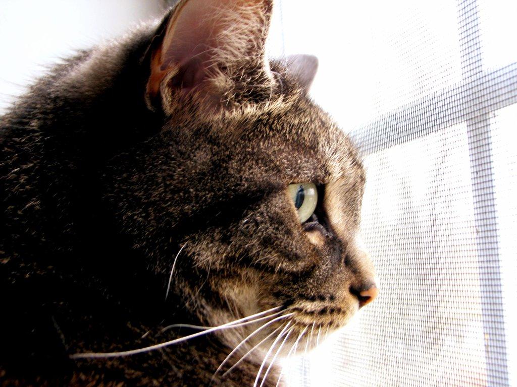 cat_in_profile_by_laurelrusswurm-d5yubav.jpg