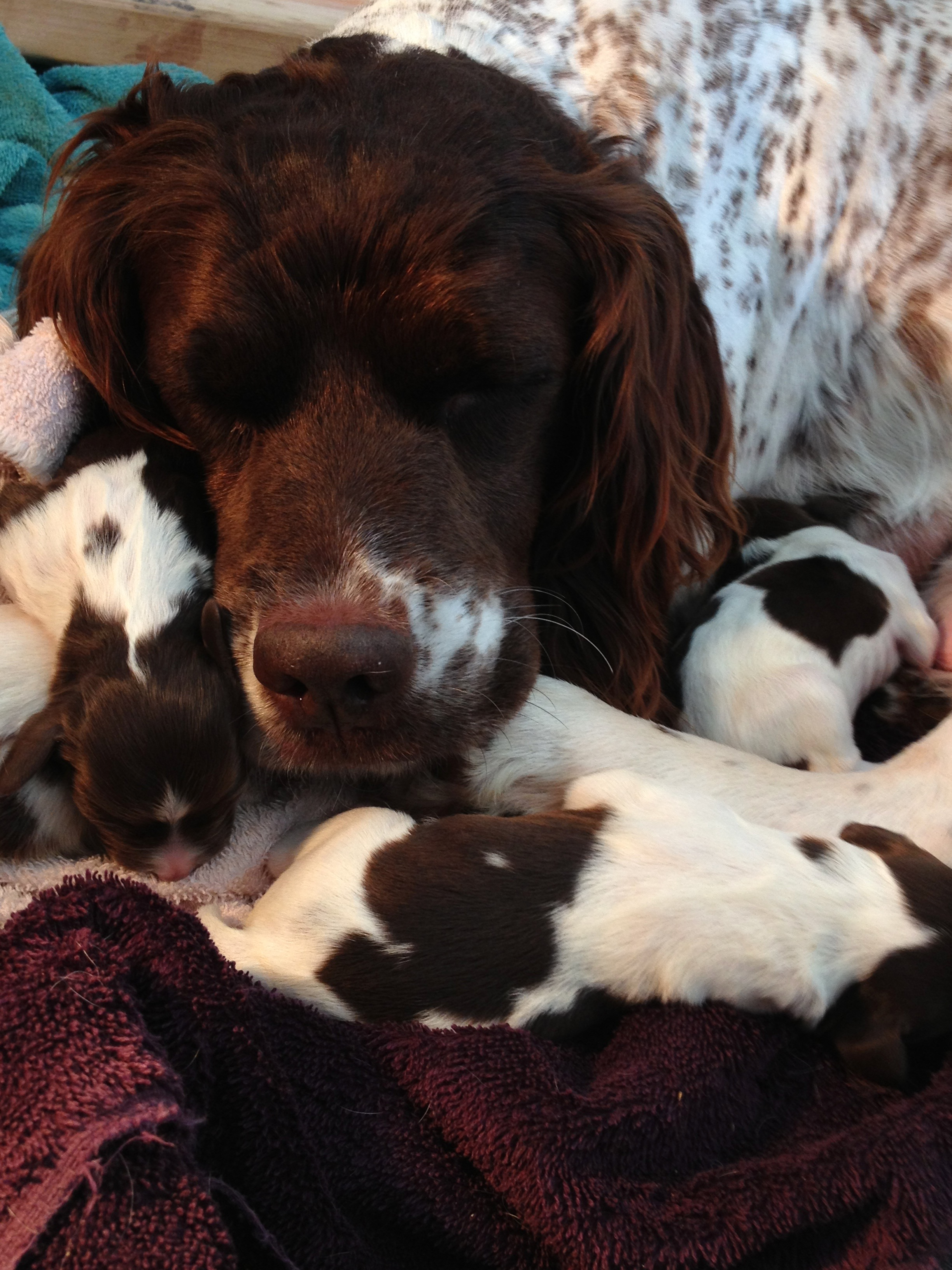 Loving her babies, such a good mom