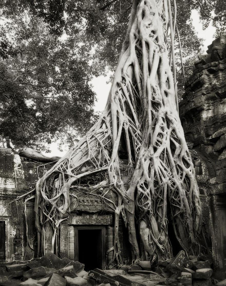 ancient-trees-beth-moon-13.jpg