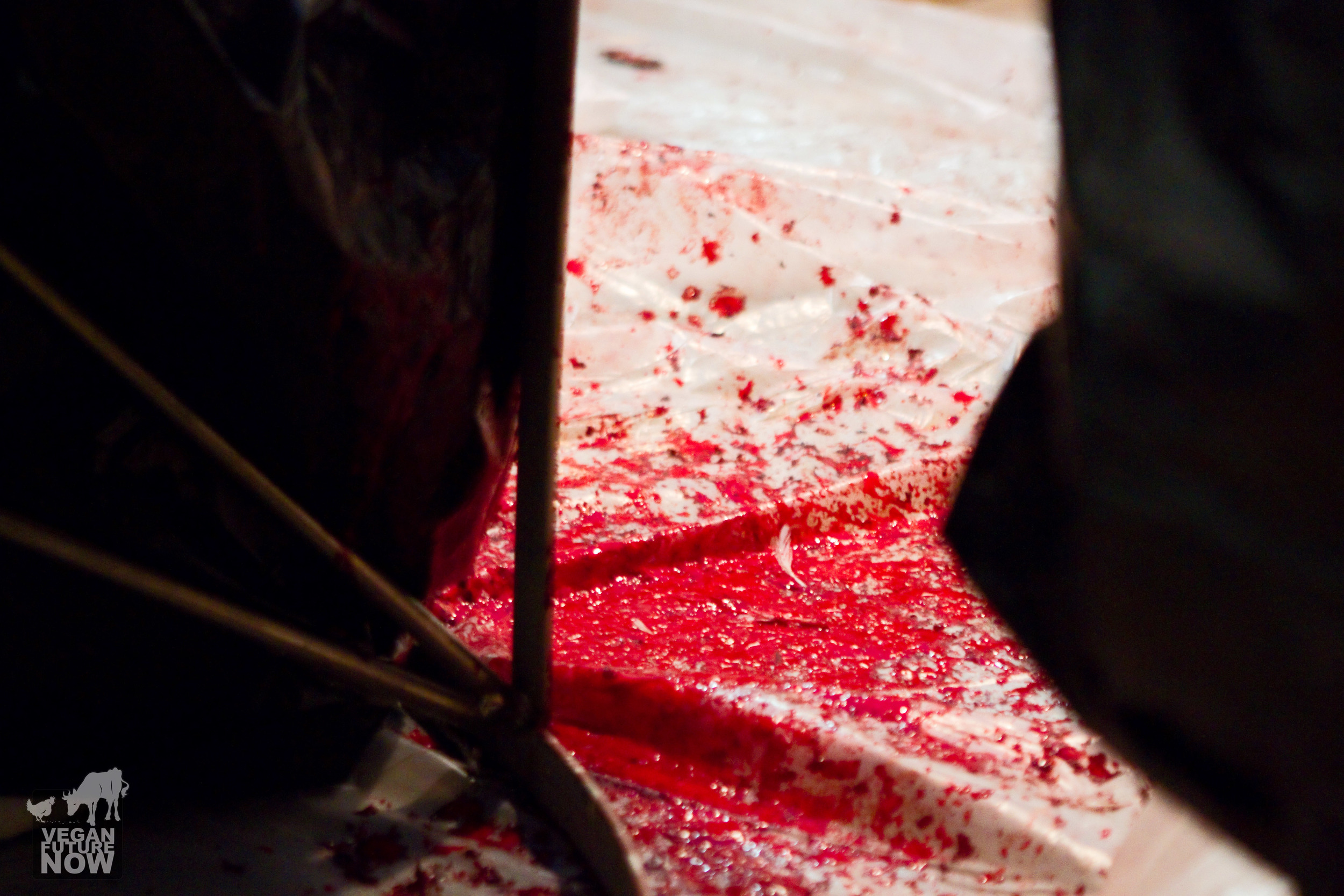 The blood of an untold number of chickens on the floor near the rabbi's feet.