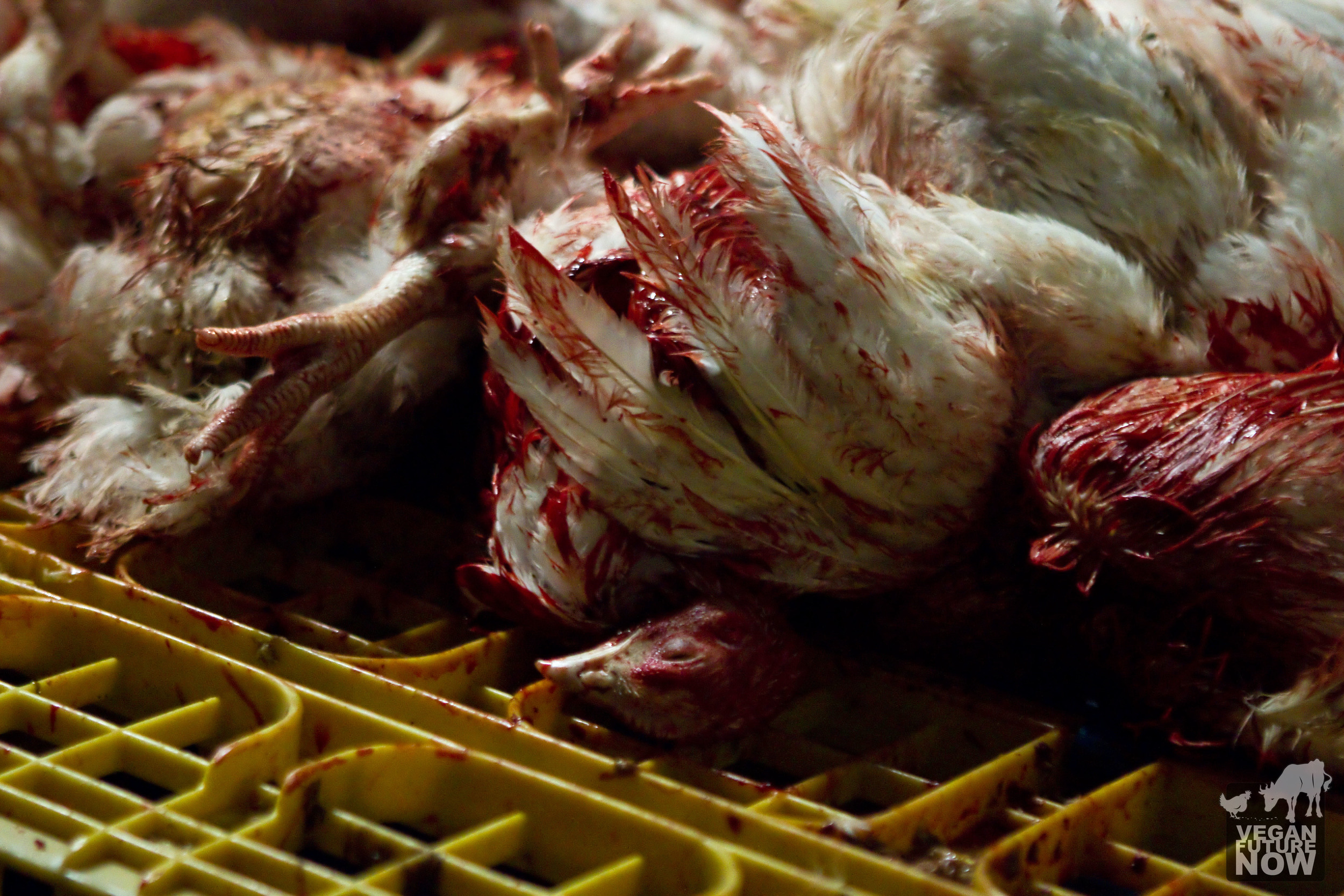 After being slaughtered and drained, the bodies of the victims are thrown onto a pile of crates, the beginning of the disassembly line.