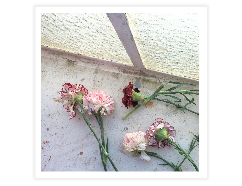santoflowers1.jpg
