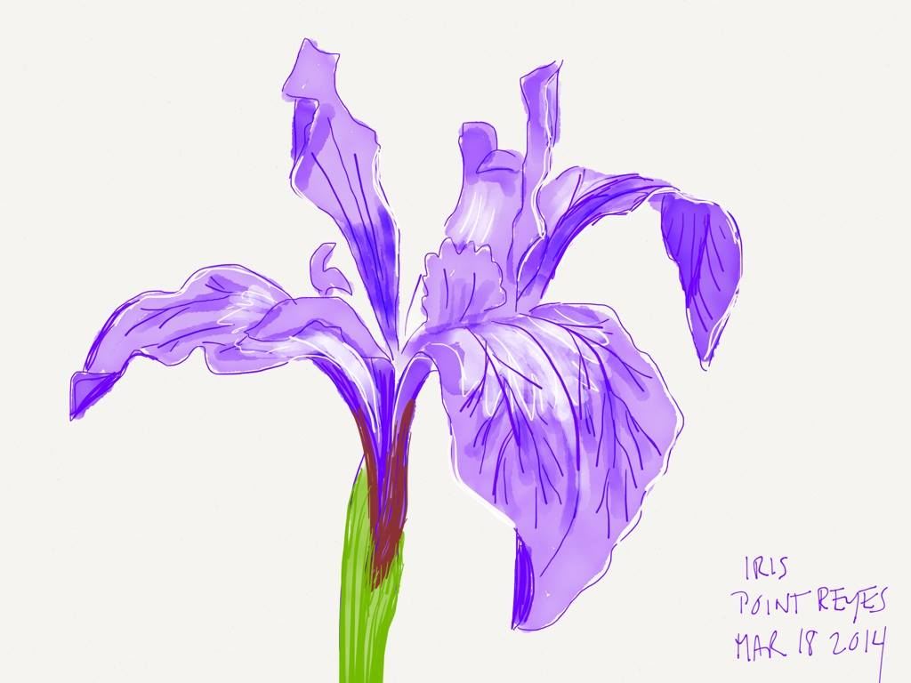iris: ipad paper by fiftythree