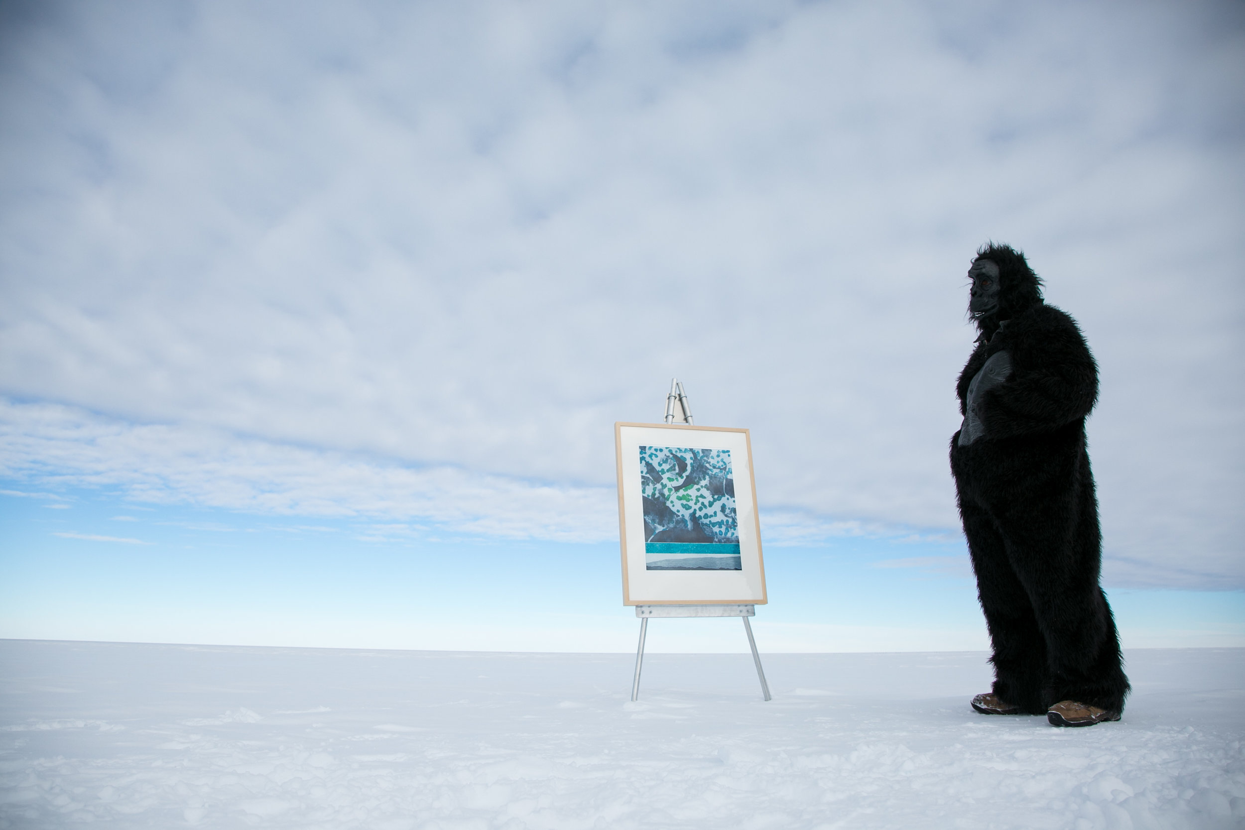 A rare sighting of the Antarctic Gorilla, known to be attracted by paintings and prints