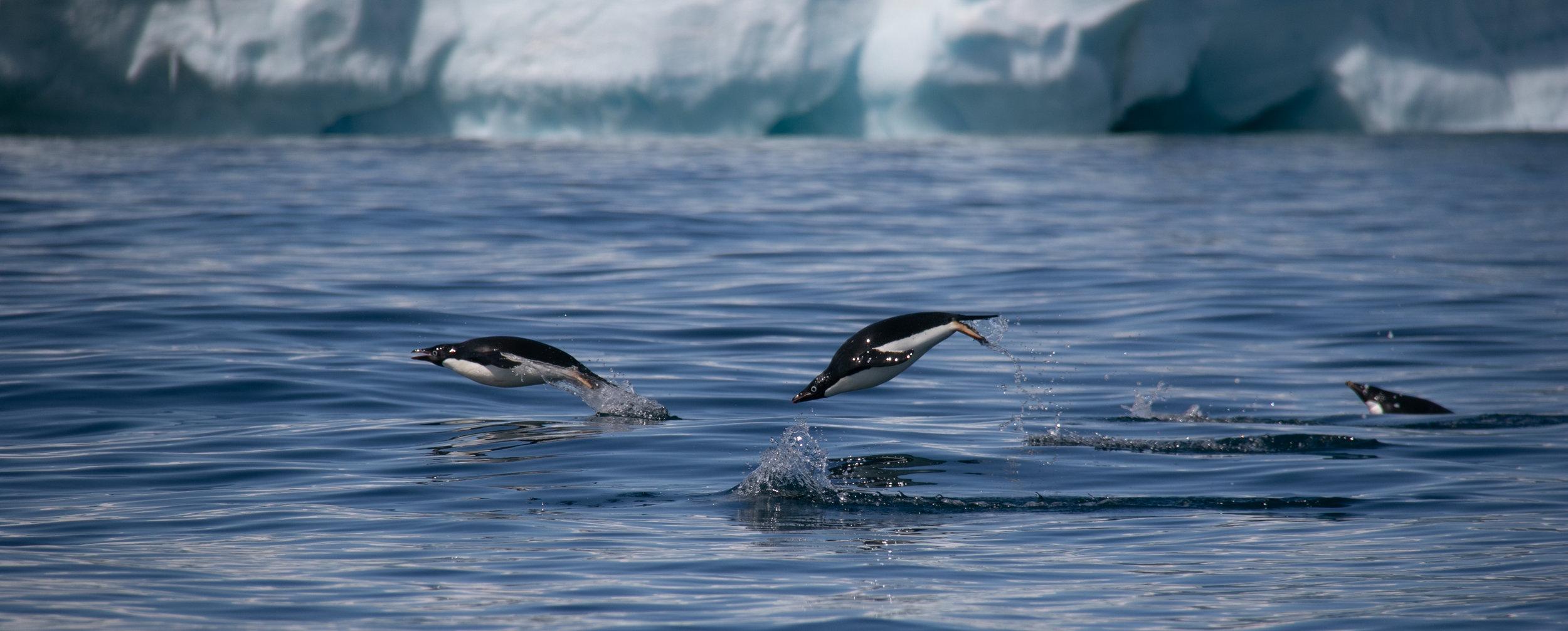 antarctica-8234.jpg