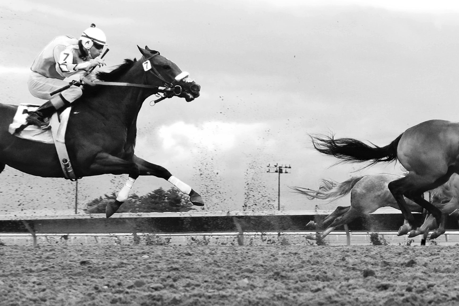 horserace2jbarnett.jpg