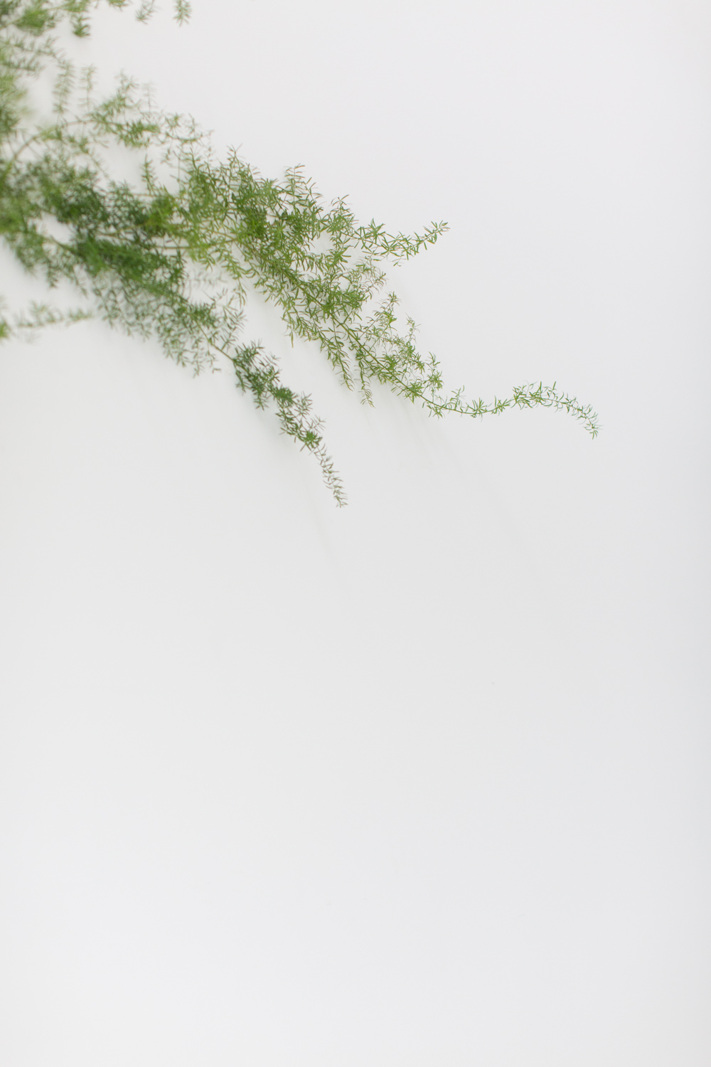 Minimal greenery on a white wall