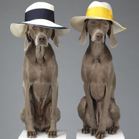 Acne-Dog-Photos-Spring-2013-William-Wegman_1.jpg