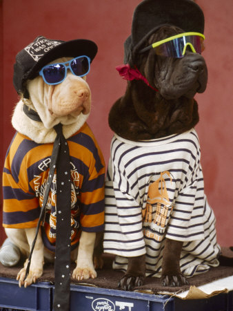 DOGS-WEARING-CLOTHES.jpg