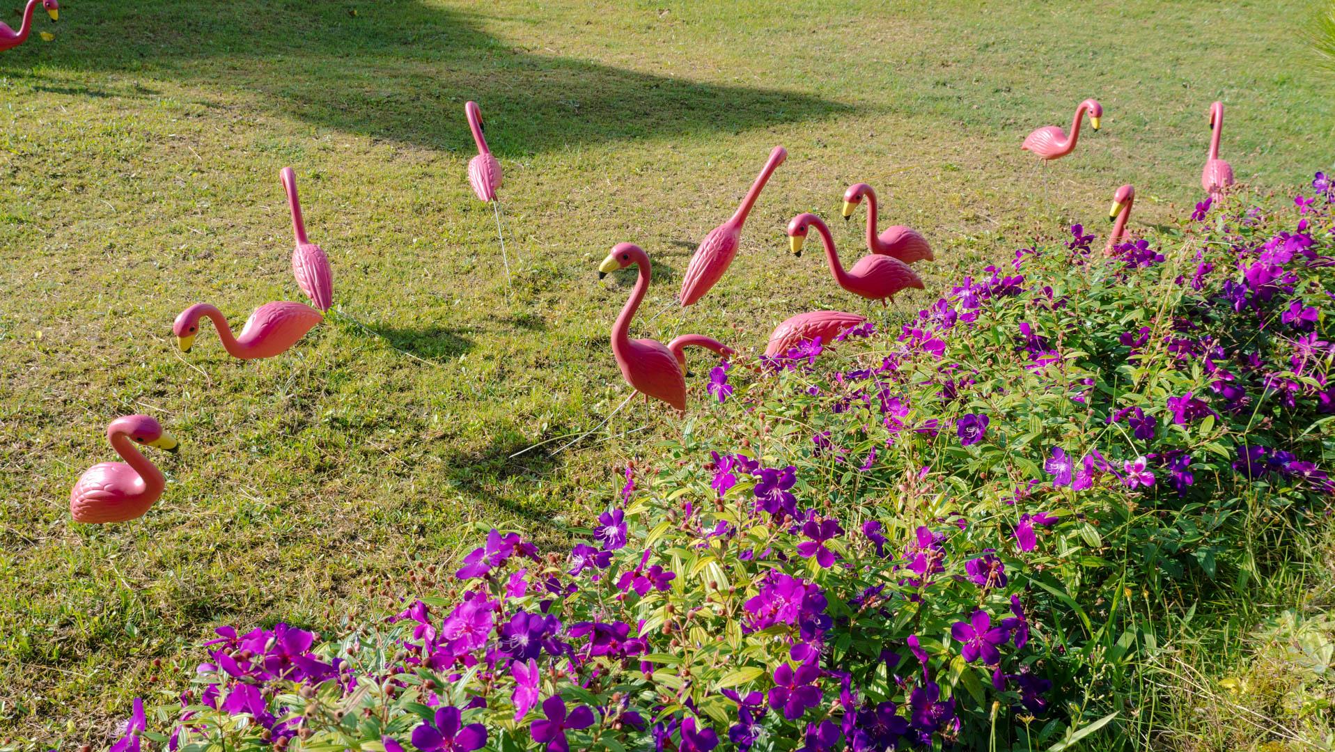 Những chú hạc hồng xinh xắn tại khu vườn Lữ Tấn