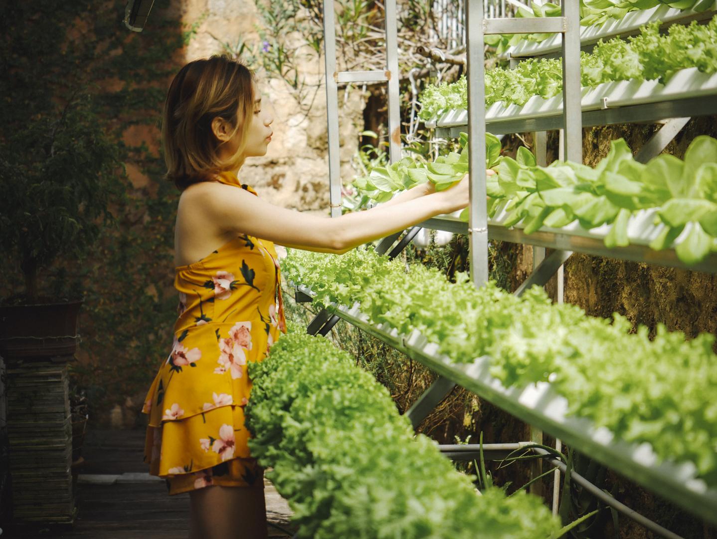 Đằng sau phòng ăn của Lữ Tấn là nơi Lữ Tấn trồng rau xà lách sạch. Không chỉ cung cấp thực phẩm tươi mới cho bạn hàng ngày, vườn rau nhỏ xinh này còn là nơi được các bạn trẻ yêu mến và thường xuyên check-in với những bức hình và thước phim long lanh tại đây đó ;)