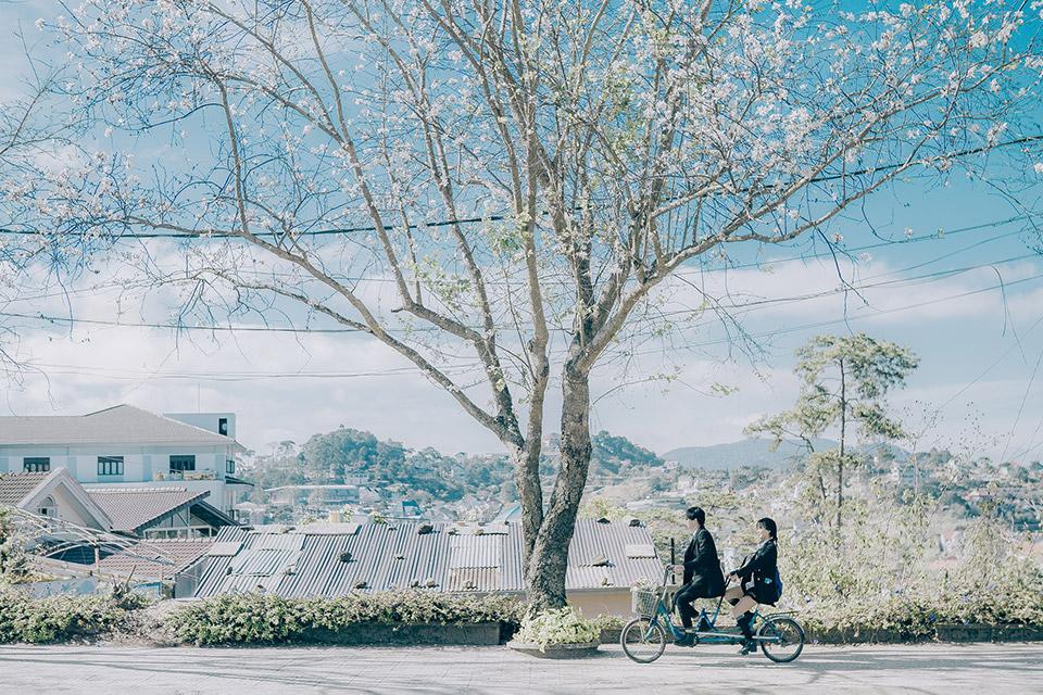 Đà Lạt mùa hoa cải trắng thật giống như một bối cảnh trong phim Hàn ấy!
