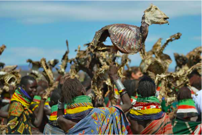 Turkana women carry dead animals they lost due to a biting drought that has ravaged livestock population in nothern Kenya near Lokitaung in Turkana county on March 20, 2017. PHOTO | AFP