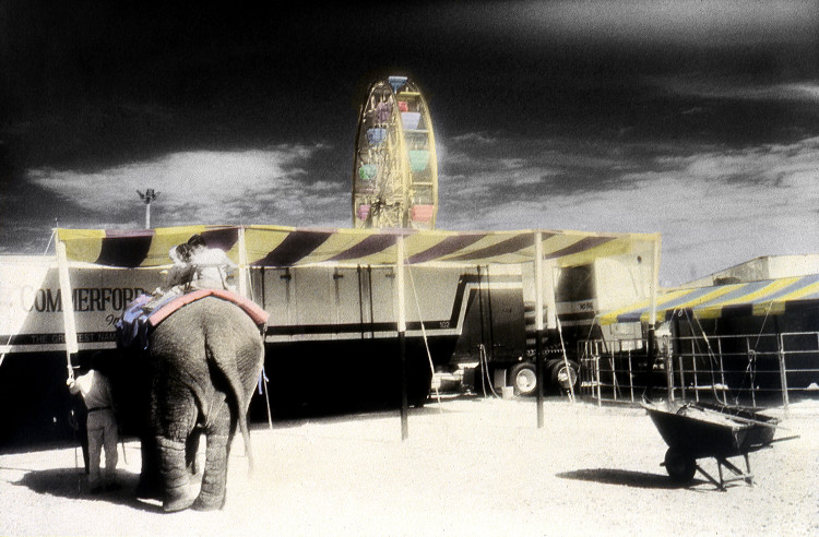 ELEPHANT RIDE  , from  The Midway  series; infrared hand-tinted b&w print; Limited Edition 2/15