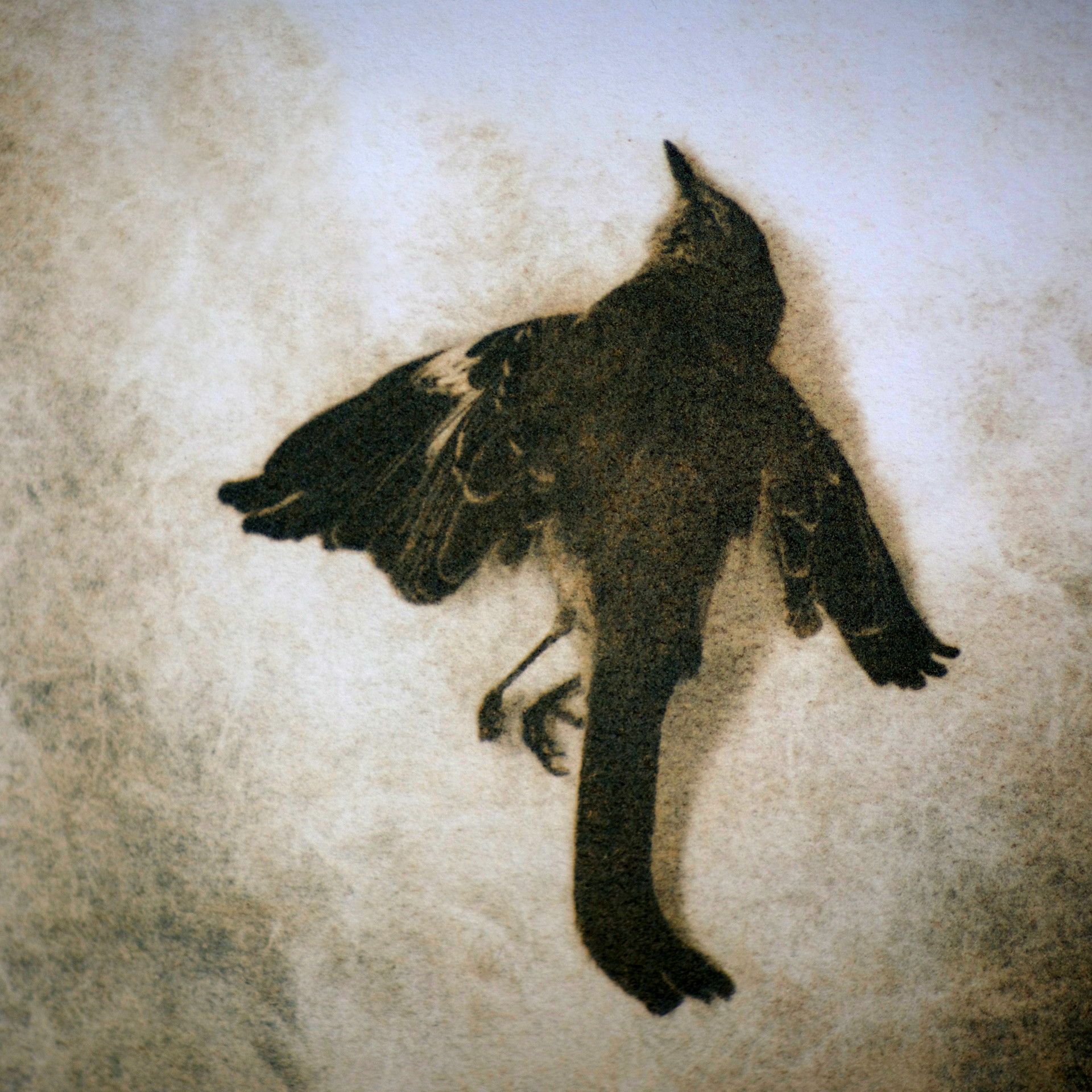 WAXWING V,   from the  Still Lives  Series.  Tri-color gum bichromate.  Limited edition 2/10