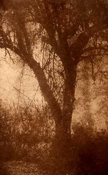 Tree in Floyd, VA ©DH Bloomfield 2016 (gumoil)