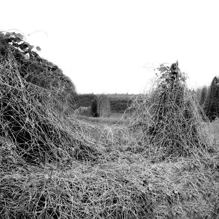 Winter Kudzu ,  Raleigh NC  (2010/2016) ,  from the  Southland Series.   Limited Edition 1/5; Pigment print