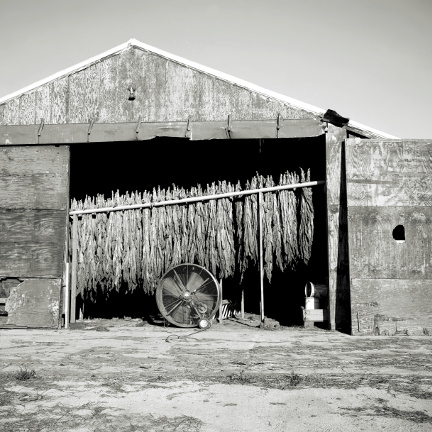 Burley Tobacco ,  Ruffin, NC , from the  Southland  series.  Limited Edition 1/5; Pigment print