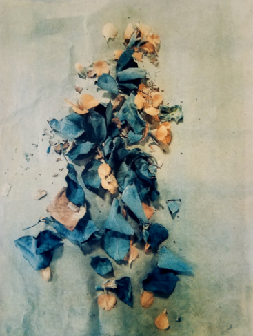Pieces of March , from  The Old Garden  series. 2018 Tri-color gum bichromate over cyanotype. Limited Edition