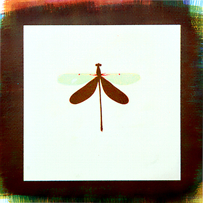 Damselfly , from  Kept Secrets  series.  Tri-color gum bichromate print.  Limited Edition