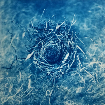 Nest , from  Kept Secrets  series.  Gum over cyanotype.  Limited Edition