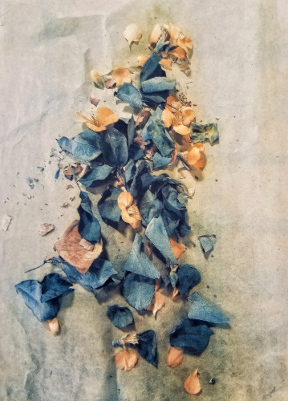 Pieces of March , 2018 ©DH Bloomfield (Tri-color gum bichromate over cyanotype)