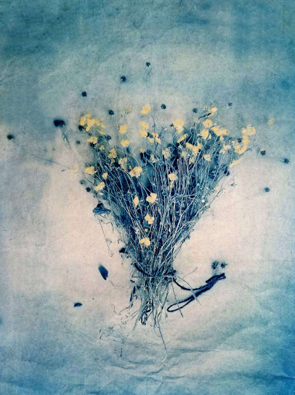 Meadow Buttercups,  from  The Old Garden (tricolor gum bichromate/cyanotype)