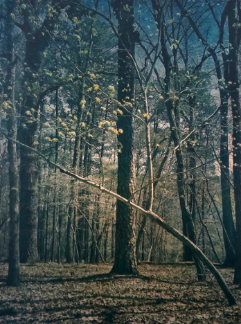 Umstead in April, 2019 , from the  Landscape  series.  Tricolor gum bichromate over cyanotype. Limited Edition of 5.
