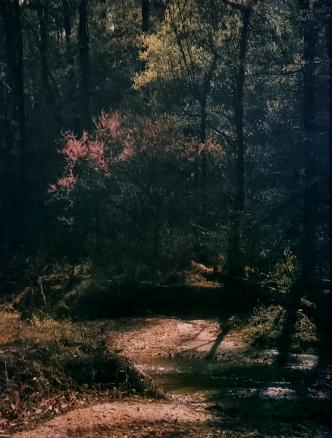 ' Redbud at Reedy Creek , from the  Landscape  series.  Tricolor gum bichromate over cyanotype  2019 Limited Edition of 5