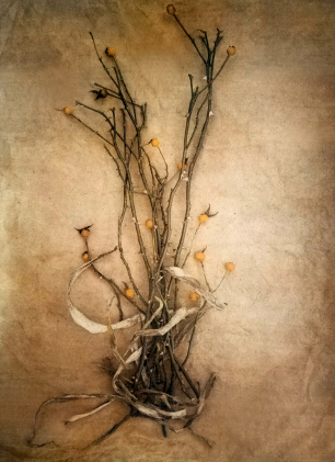 Rose Hips, 2019 /  Tricolor gum bichromate over cyanotype, from  The Old Garden   series.  Limited Edition of 5.