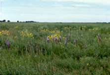 Iowa Wildlife Management District