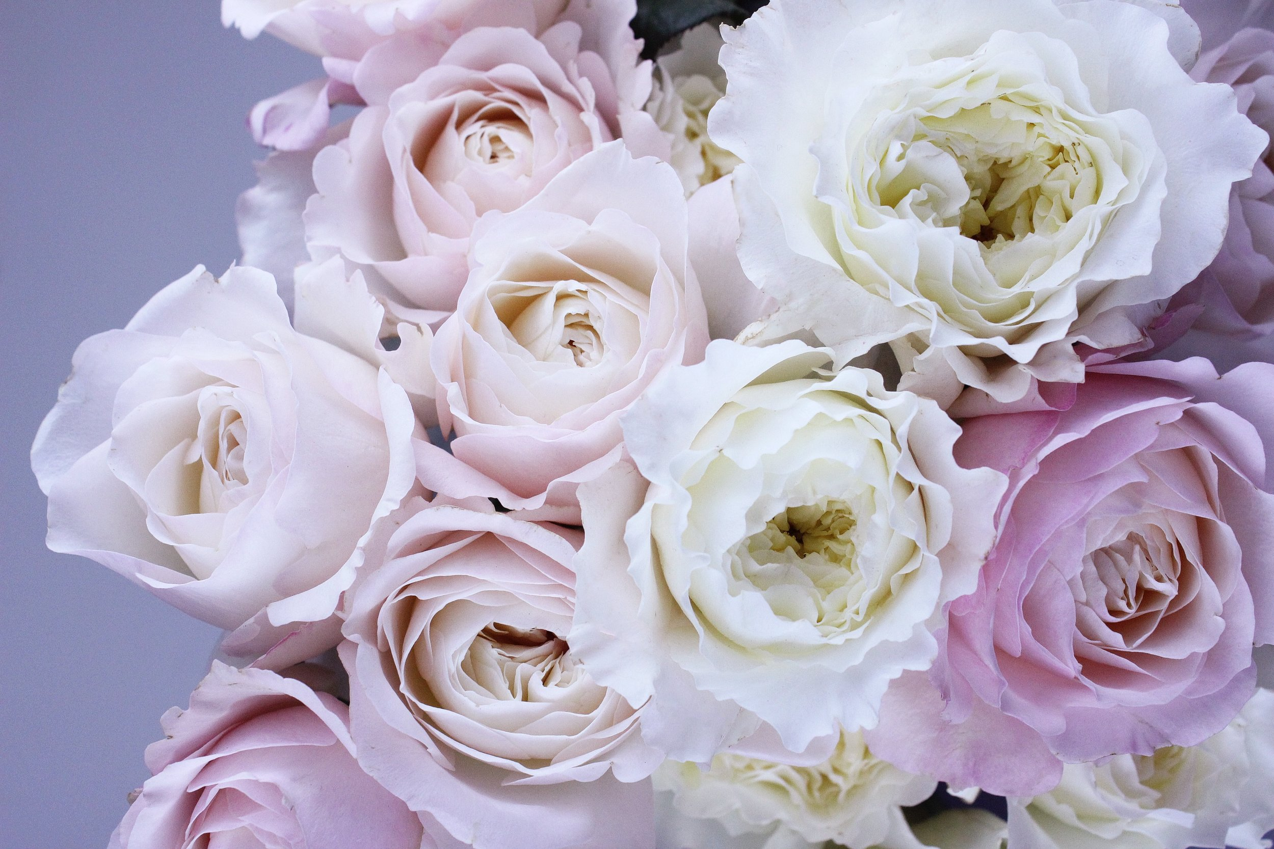 Roses in your wedding & reception