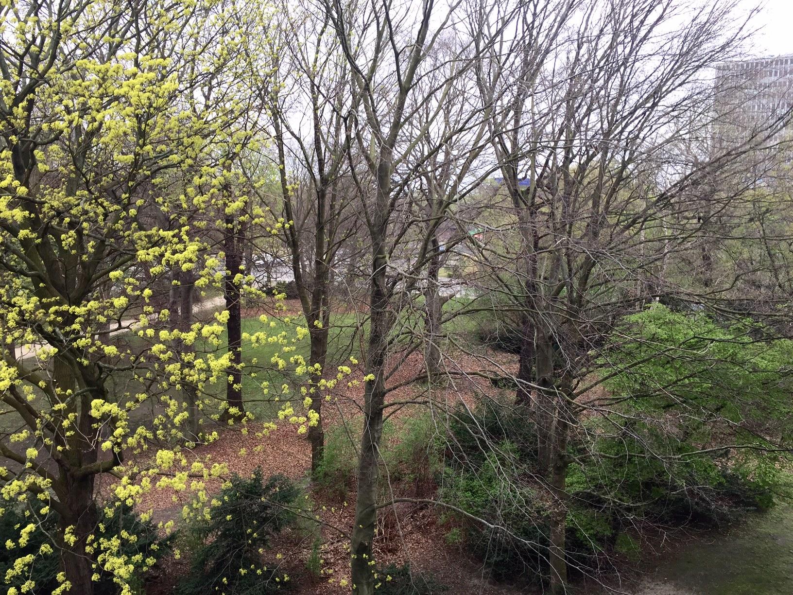 View for my apartment in Berlin, looking over Tiergarten park