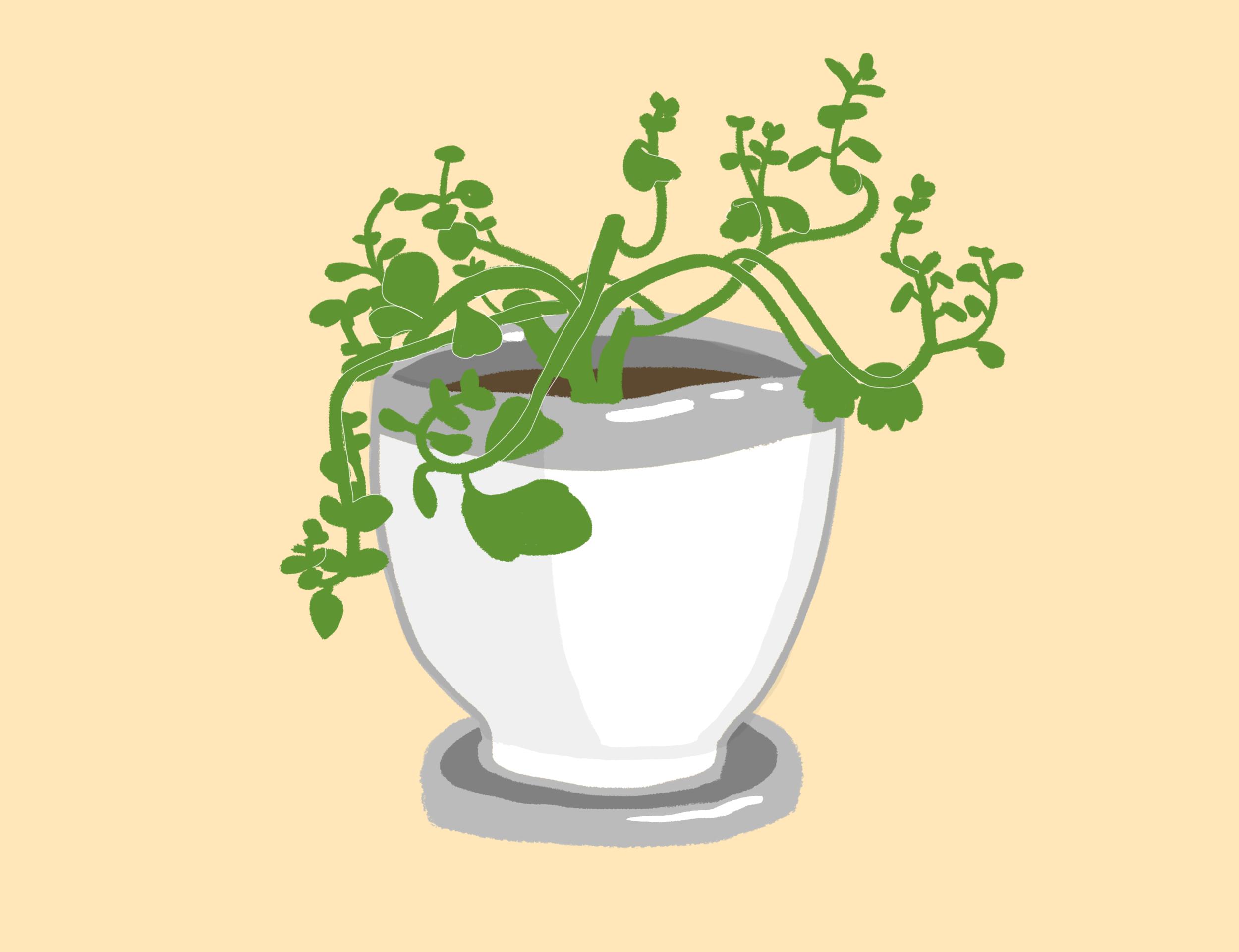 Plant Friend.png
