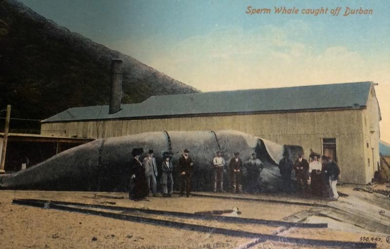 A 1907 postcard featuring a scene from Amagansett.