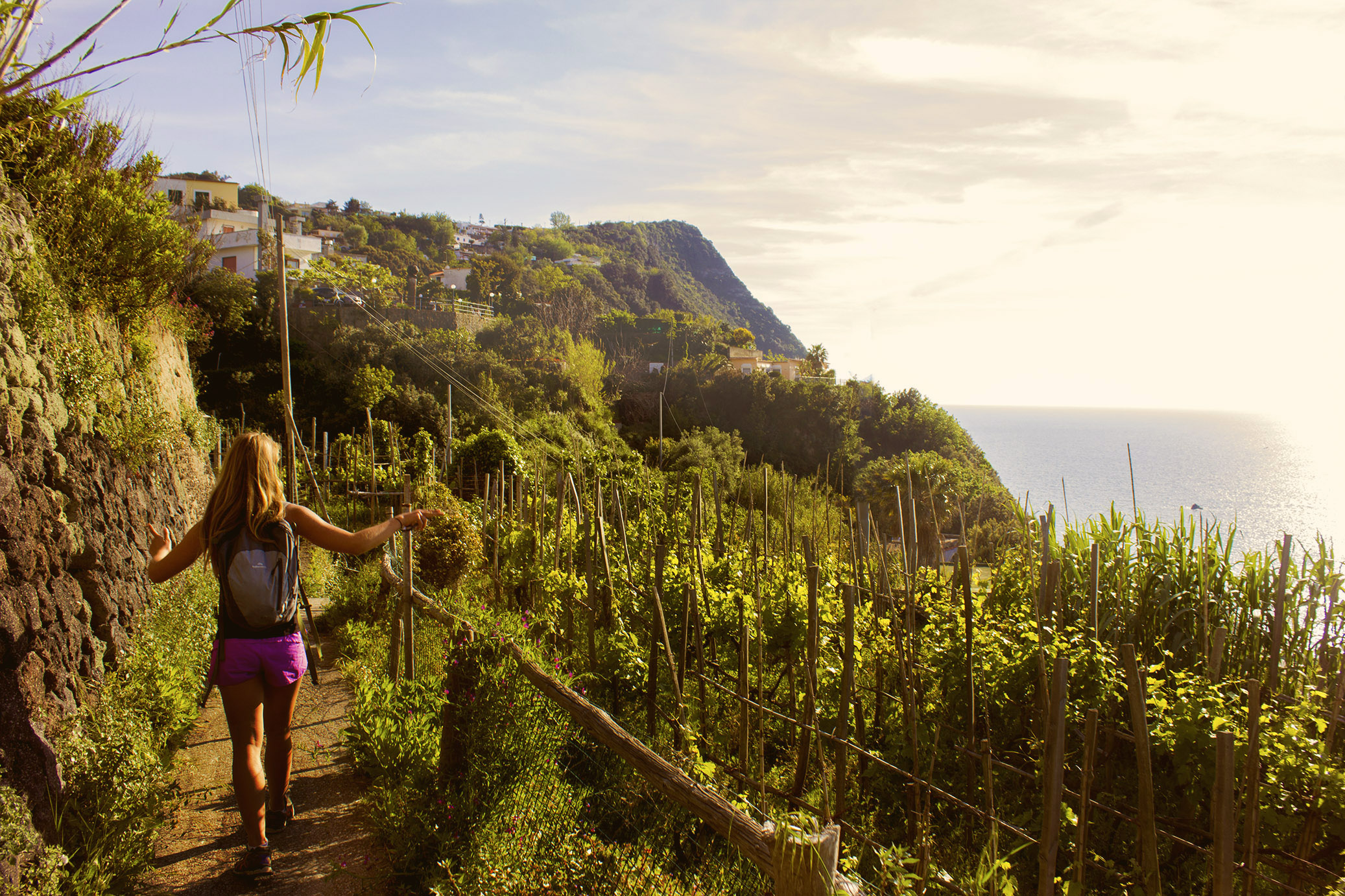 Wine of Ischia