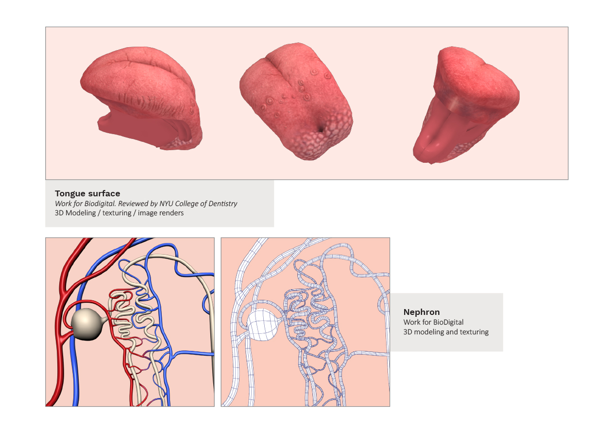 anatomypages-3.jpg