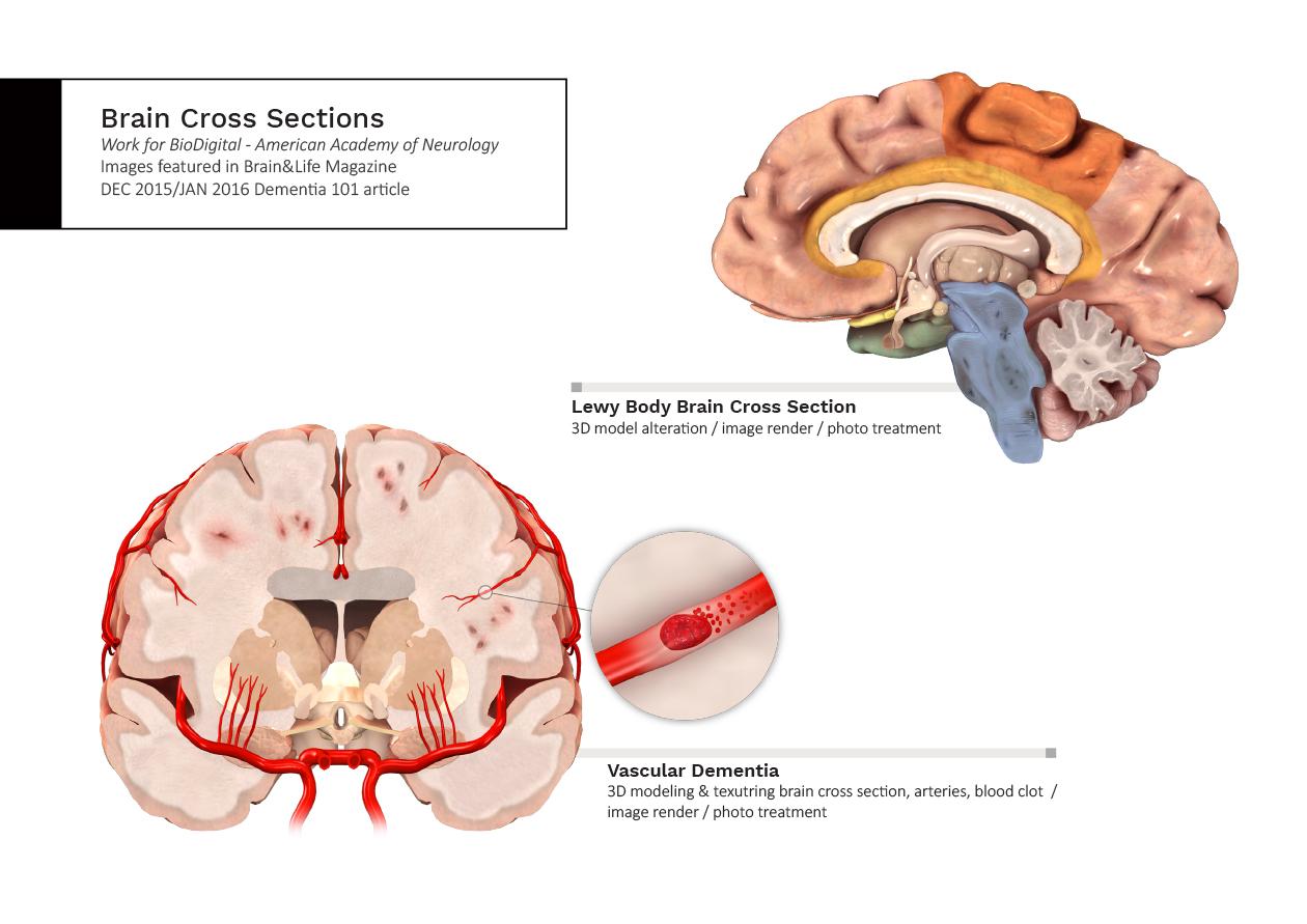 anatomypages-4.jpg