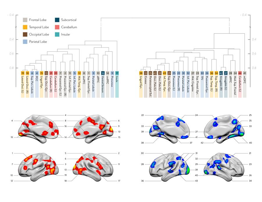 brain_infographic_900.jpg