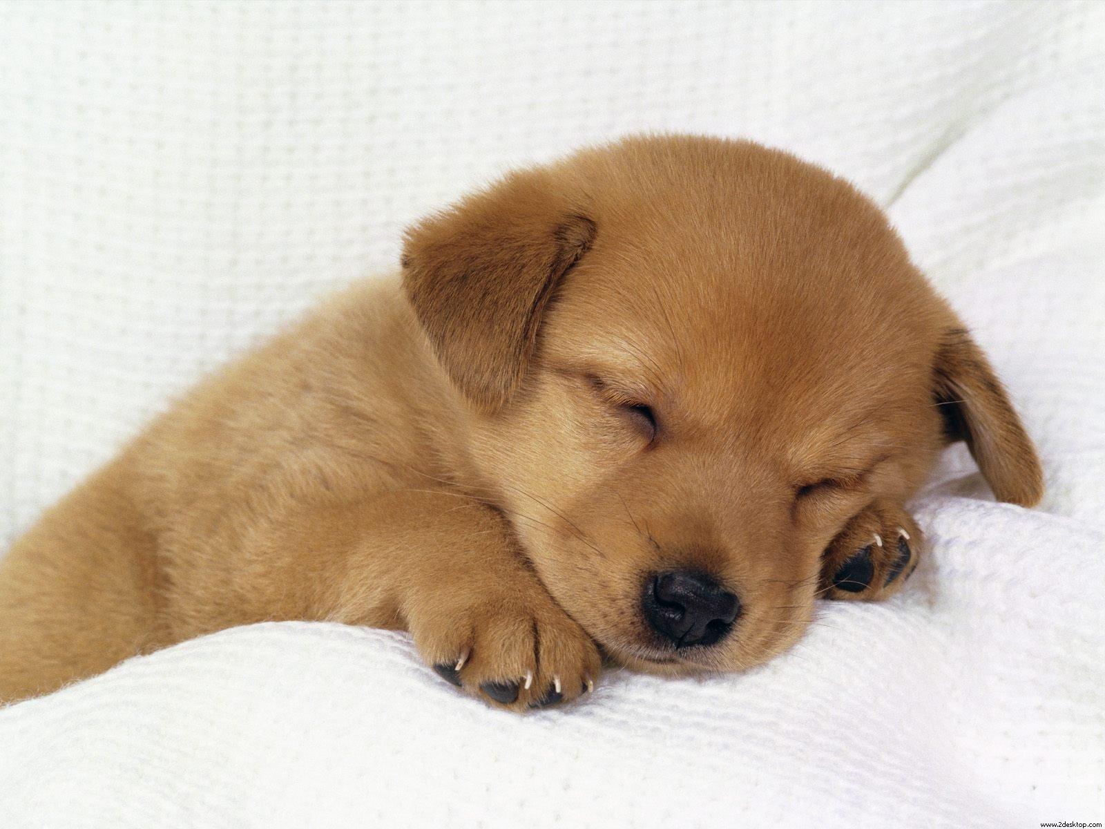puppy_4.jpg